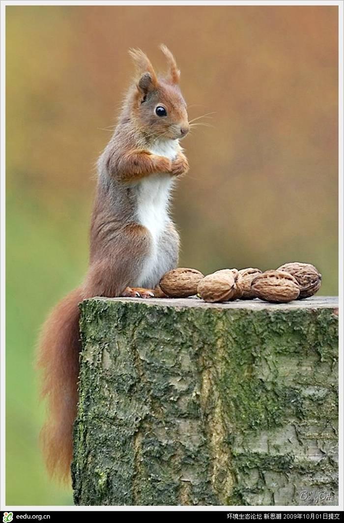 超可爱的松鼠!