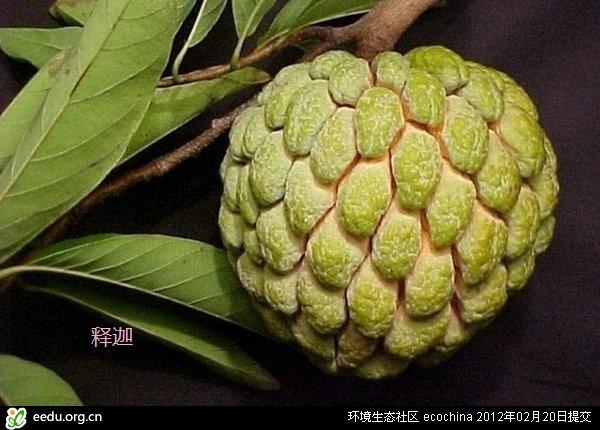 re:世界上最怪异美艳的水果
